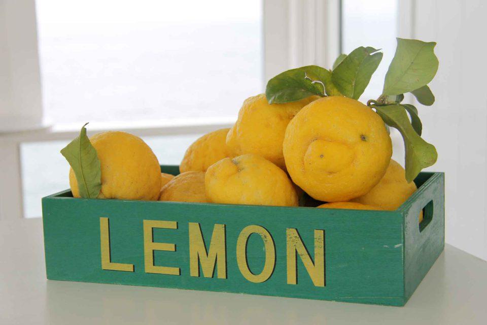 procida Limoni
