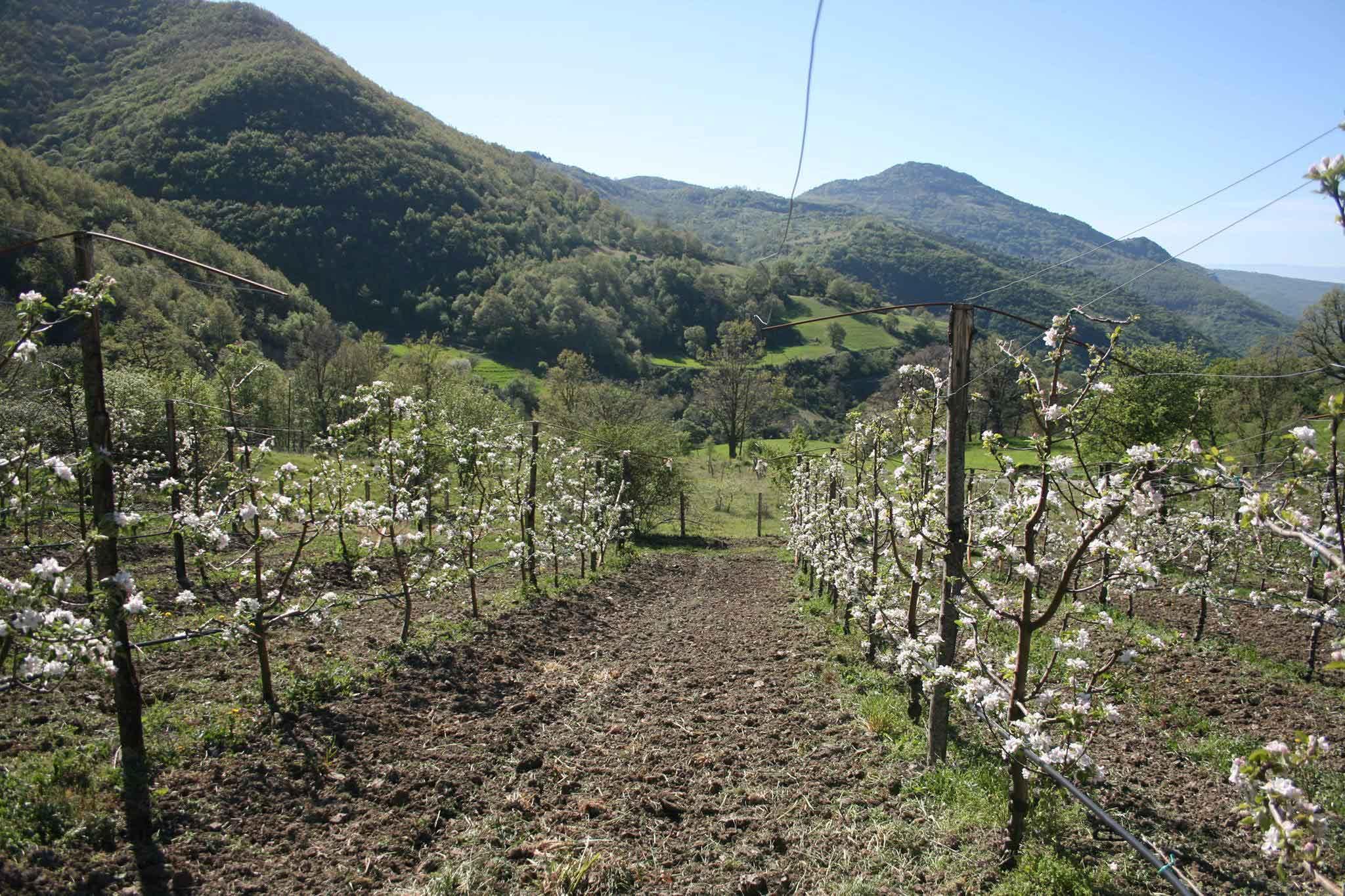alberi mele