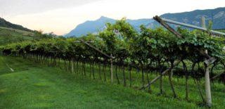 La Nosiola del Maso Grener è un ottimo pretesto di vacanza in Trentino
