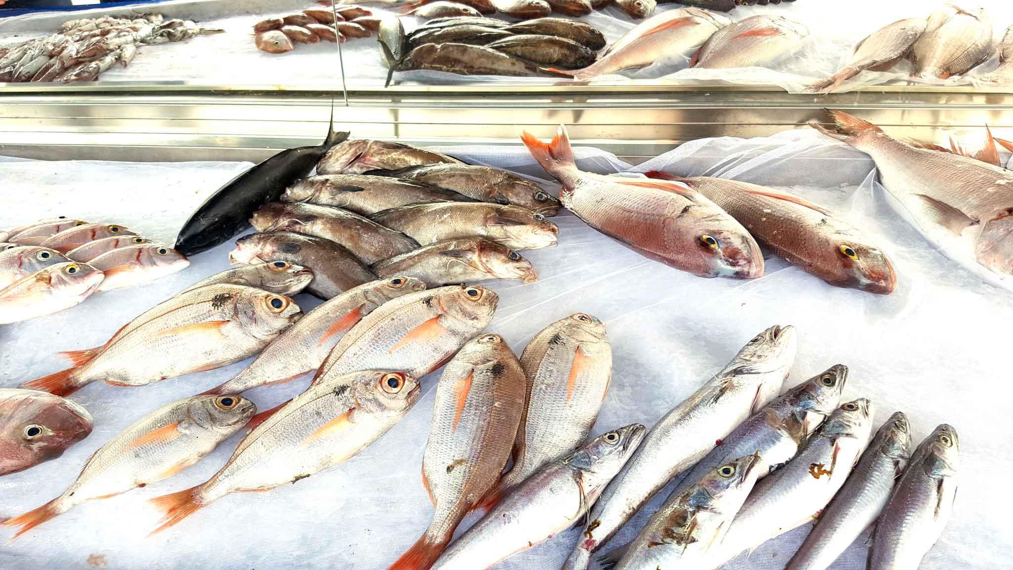 lampedusa-pescheria-pescato