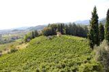 Moscato di Scanzo. La festa della più piccola DOCG in Italia