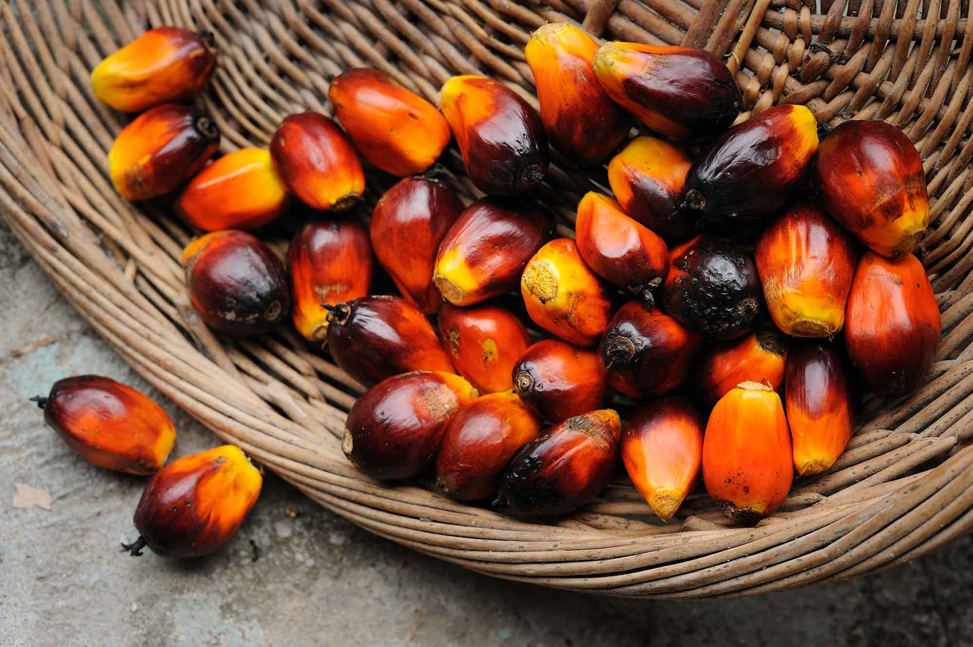 olio-di-palma-cesto