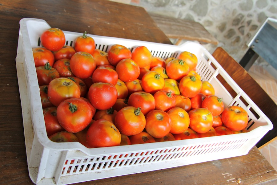 pomodori-mulino