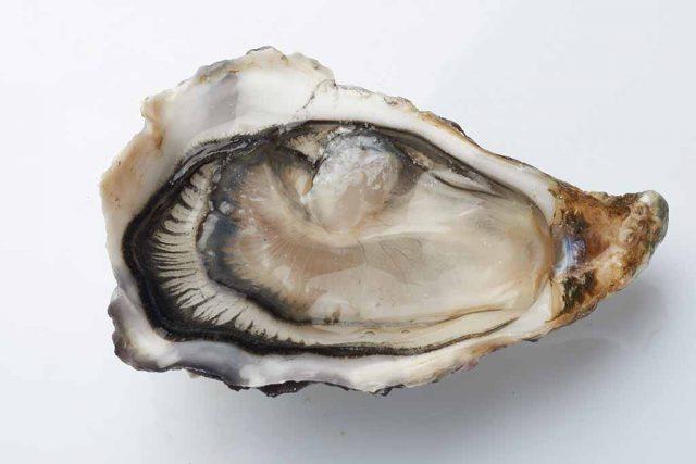 ostriche-fine-de-claire