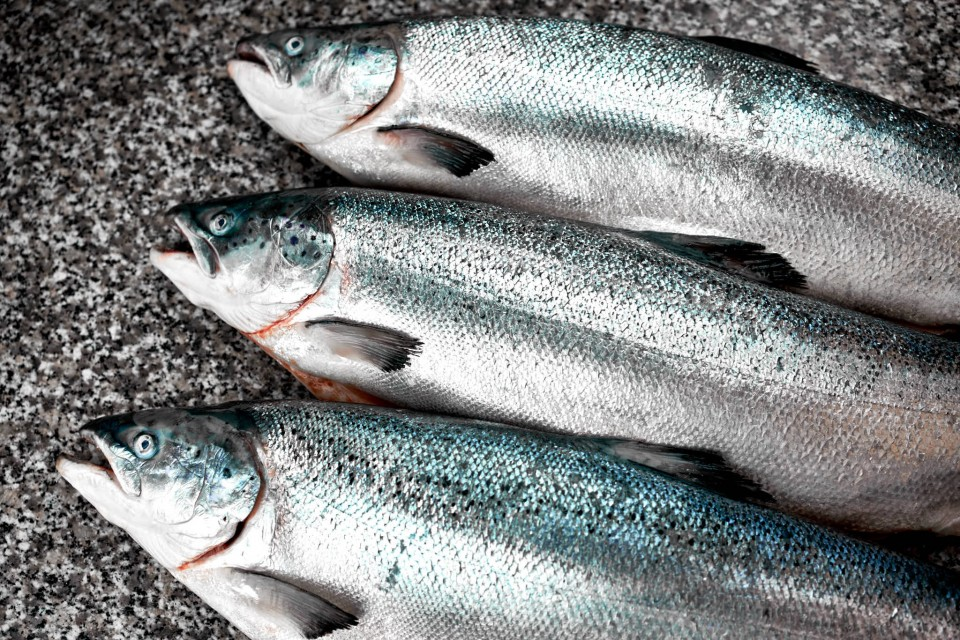 salmoni-da-affumicare