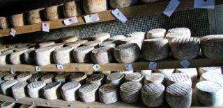 Il fantastico formaggio di capra dell'azienda La Chèvre Heureuse in Valle d'Aosta