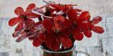 San Valentino. Rose rosse di carne da regalare a una carnivora