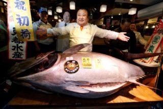 Video. Il Re del Tonno stabilisce un nuovo record: 600mila euro per 212 kg di tonno