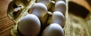 Uova al Fipronil. Conoscere i marchi da evitare in Italia oltre alle omelette surgelate Kagerer