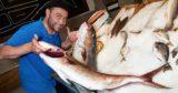 Torino. Pescheria Gallina per mangiare o comprare il migliore pesce fresco