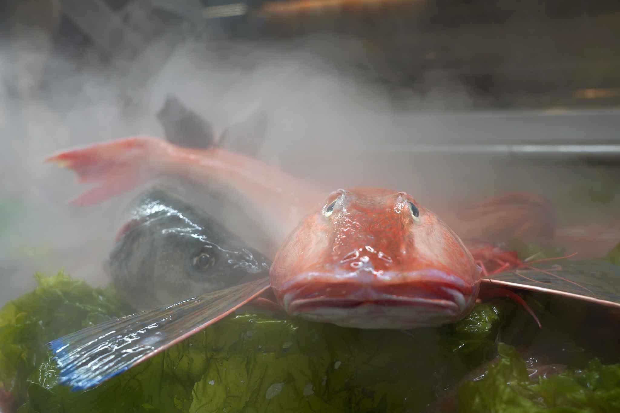 pesce in vetrina