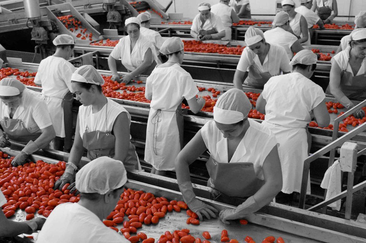 pomodori pelati lavorazione