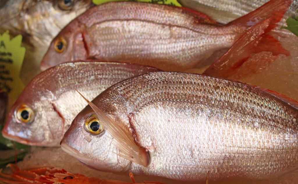pesce pagello fragolino