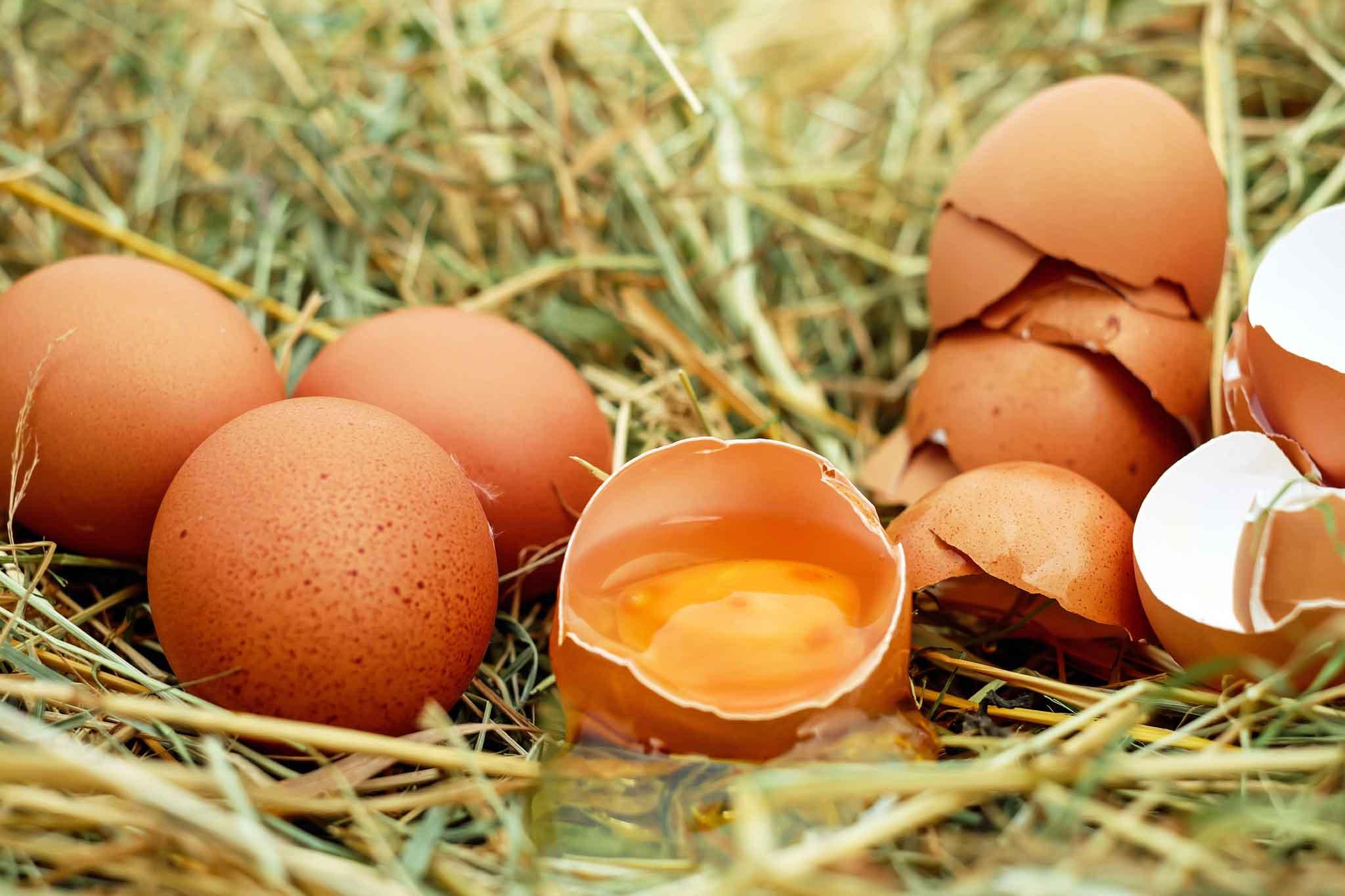migliori uova biologiche