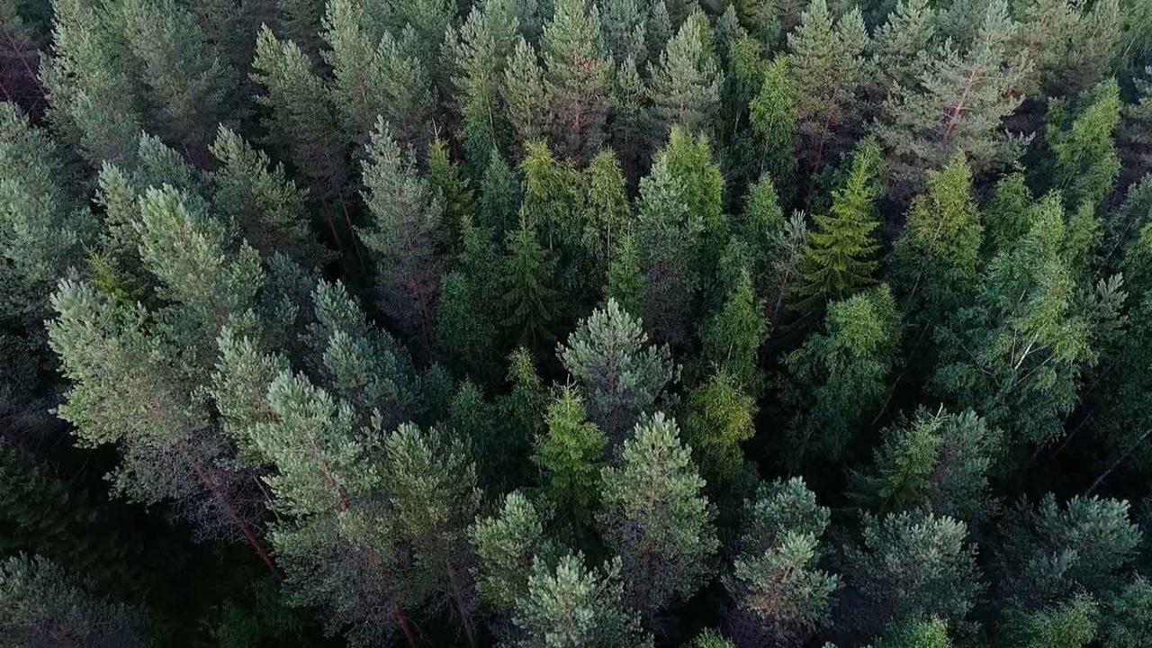 foresta in Svezia