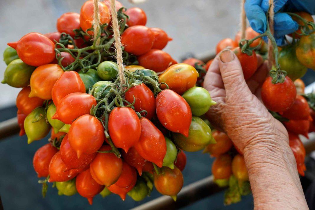 pomodorino del piennolo del Vesuvio preparazione schiocca