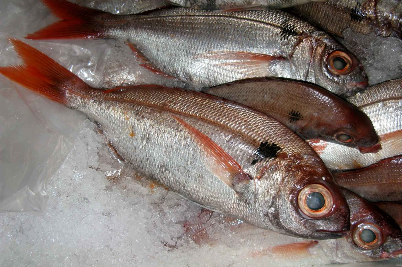 pesce: pezzogna come riconoscerla