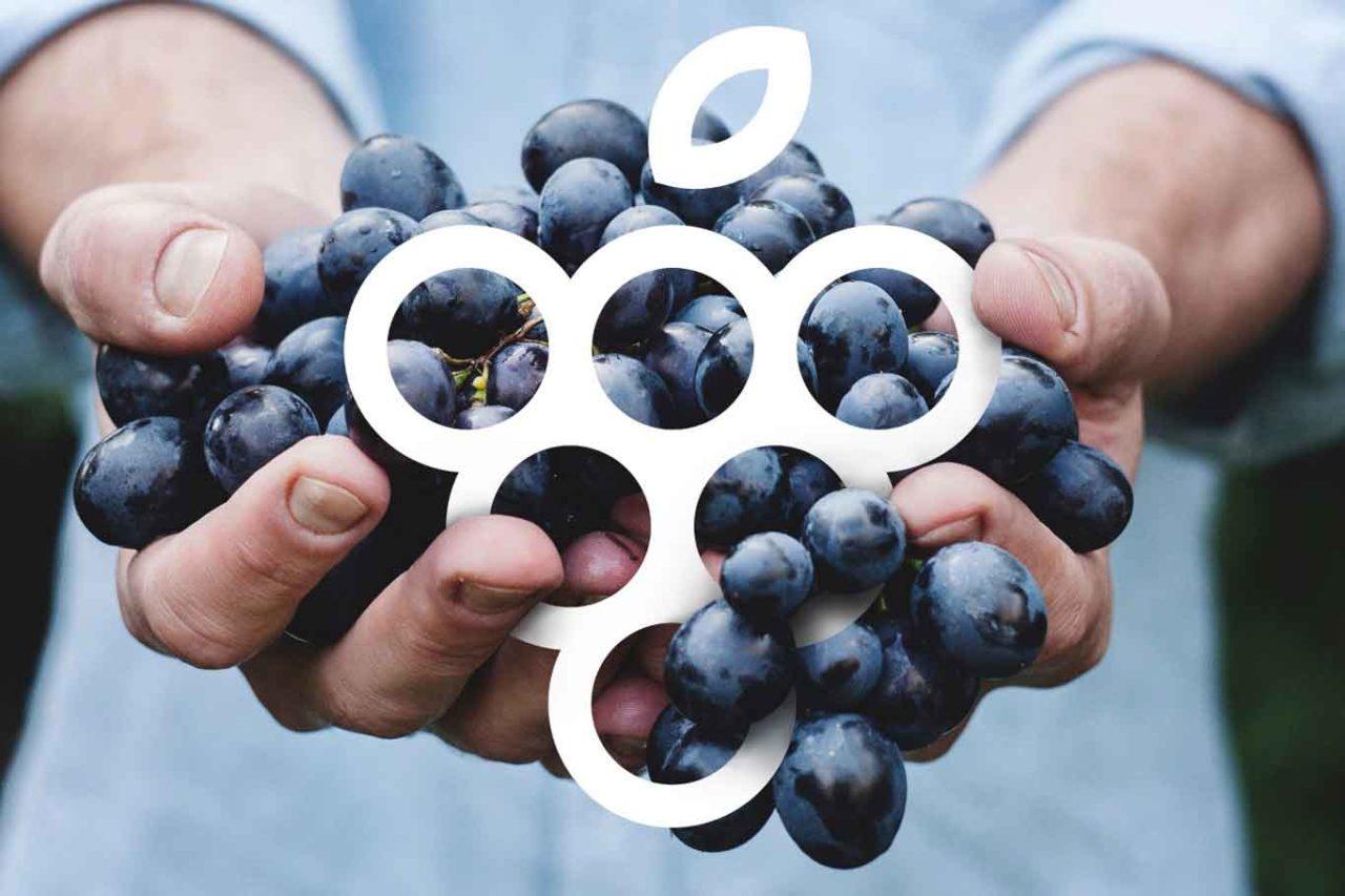 Vitigni autoctoni uva