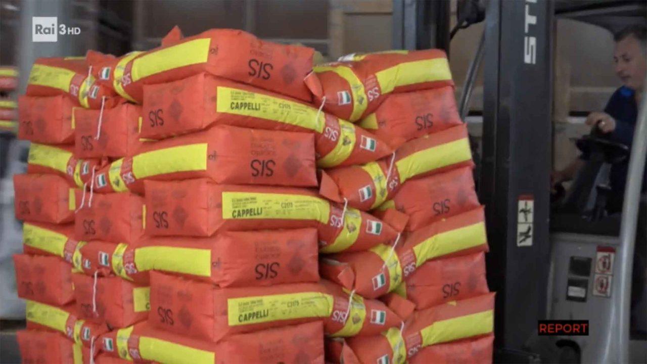 sacchi di grano Senatore Cappelli SIS