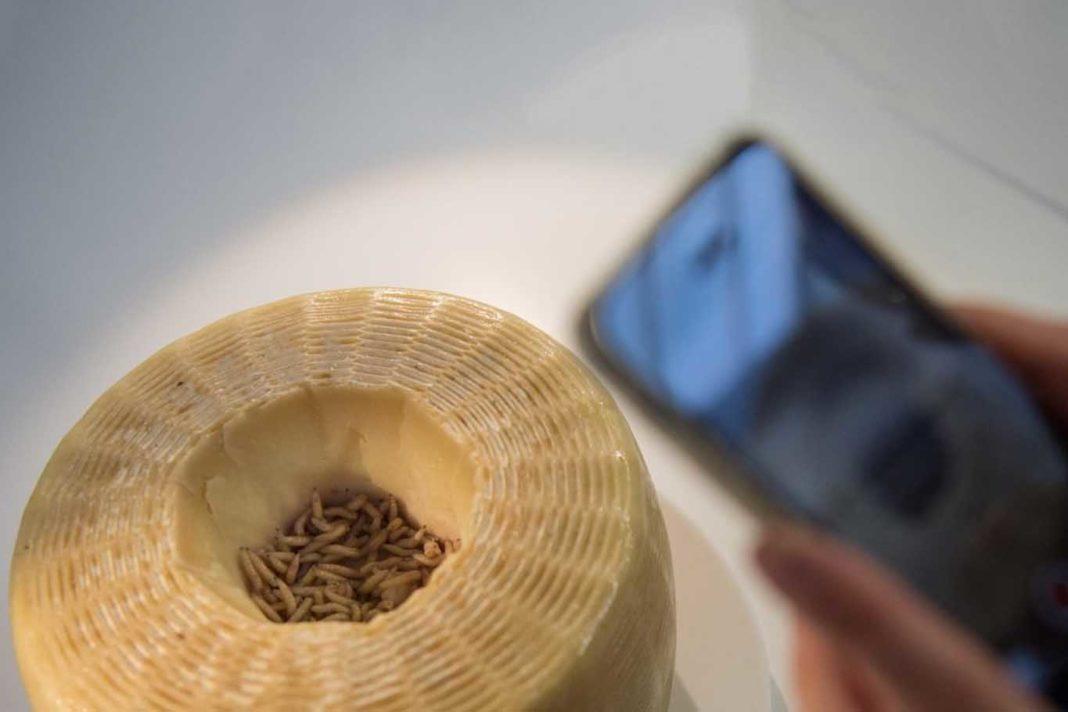 casu marzu formaggio con i vermi Sardegna foto smartphone