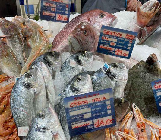 pesce e zone di pesca FAO