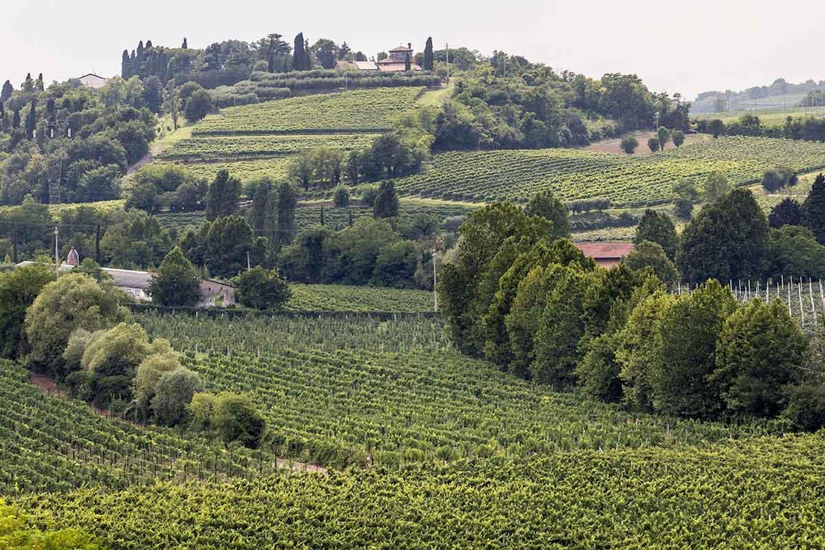 vino Bardolino Sommacampagna