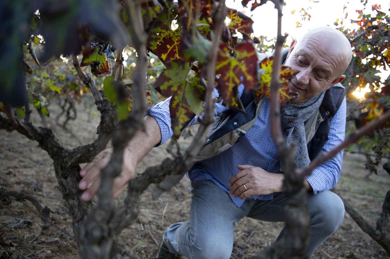 Alessandro Berselli vigna vino online