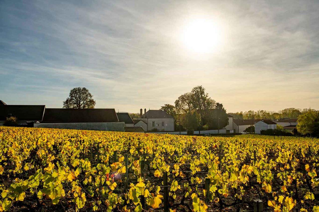 maison champagne Billecart-Salmon viti