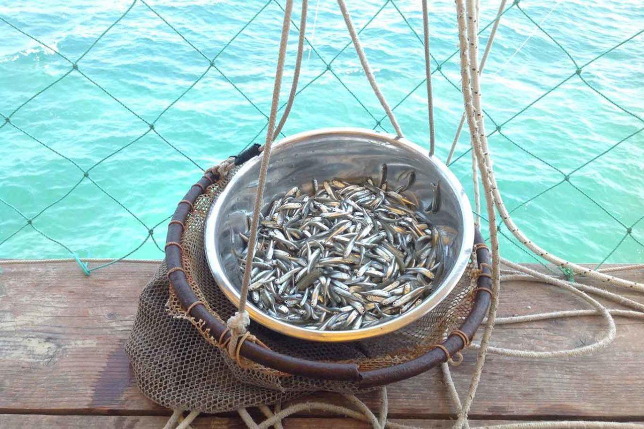 Costa dei Trabocchi in Abruzzo: pesce