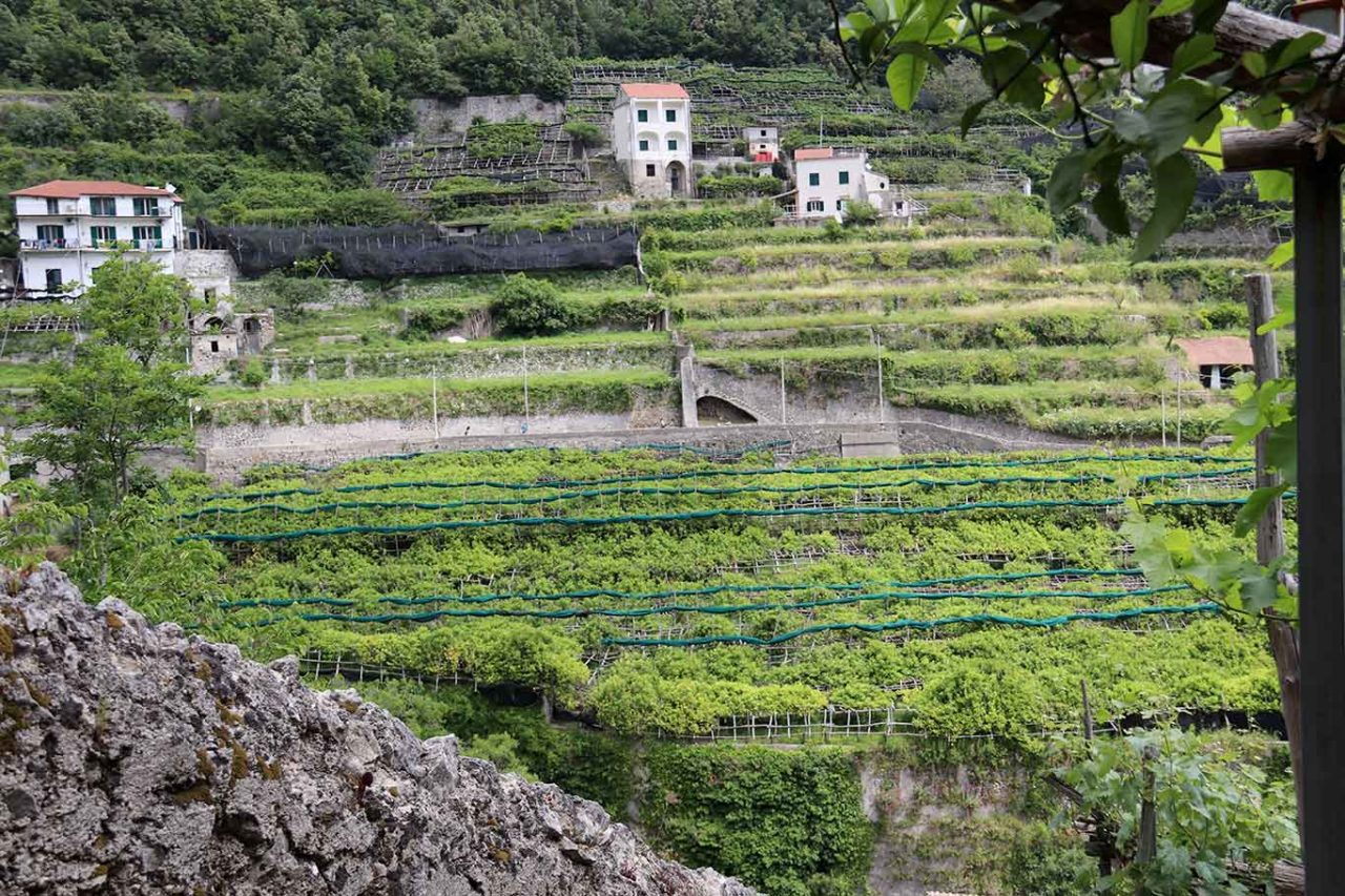 limoni di Amalfi terrazzamenti