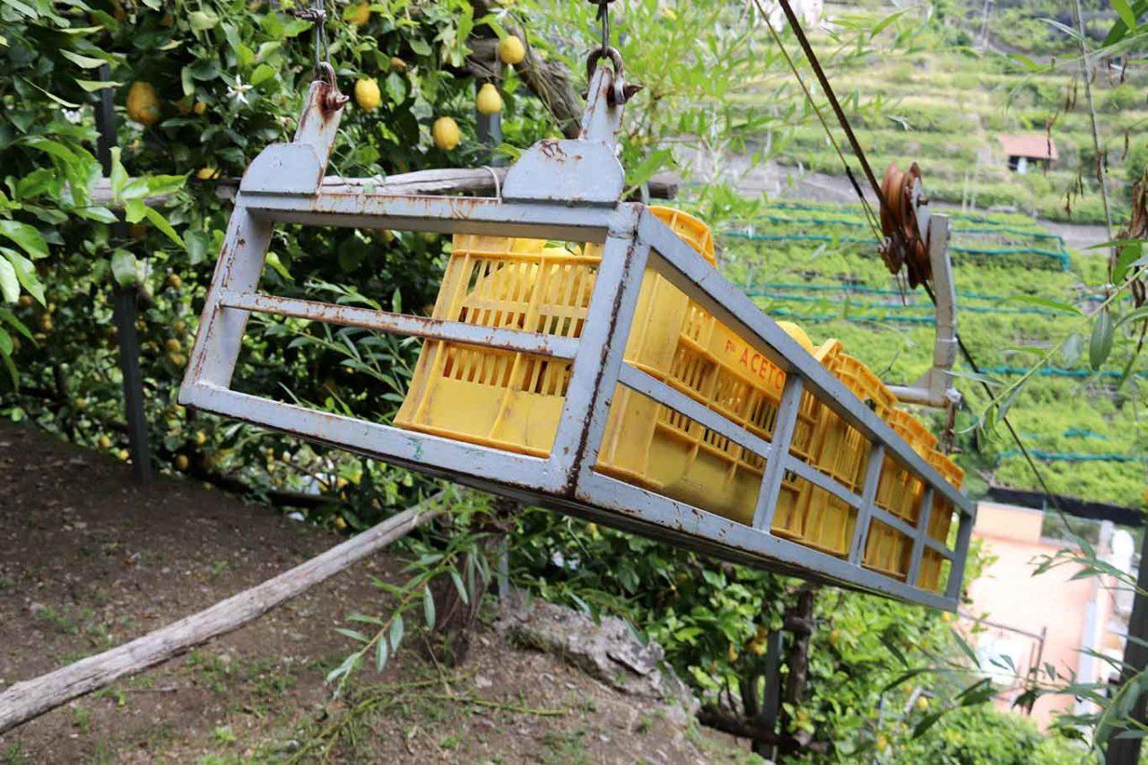 limoni di Amalfi trasporto