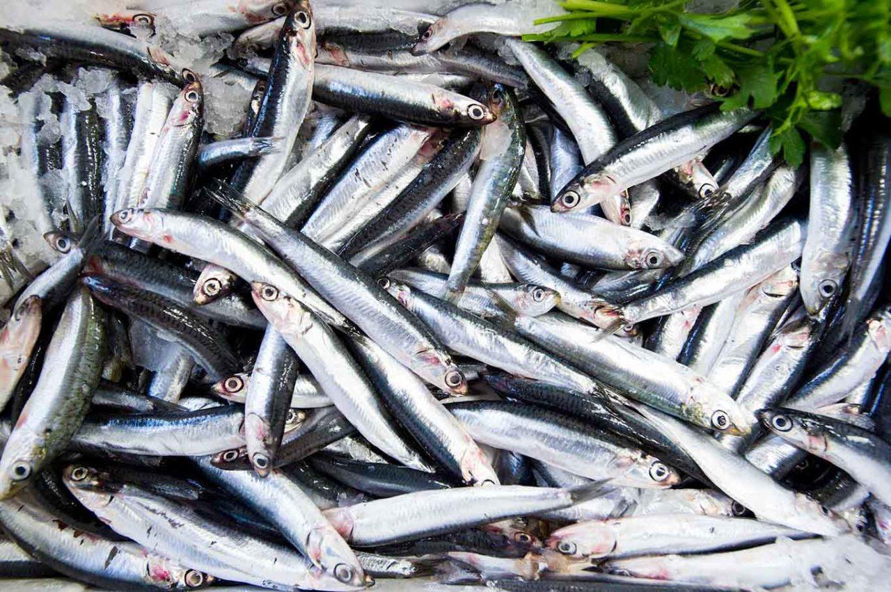 tipi di pesce: alici