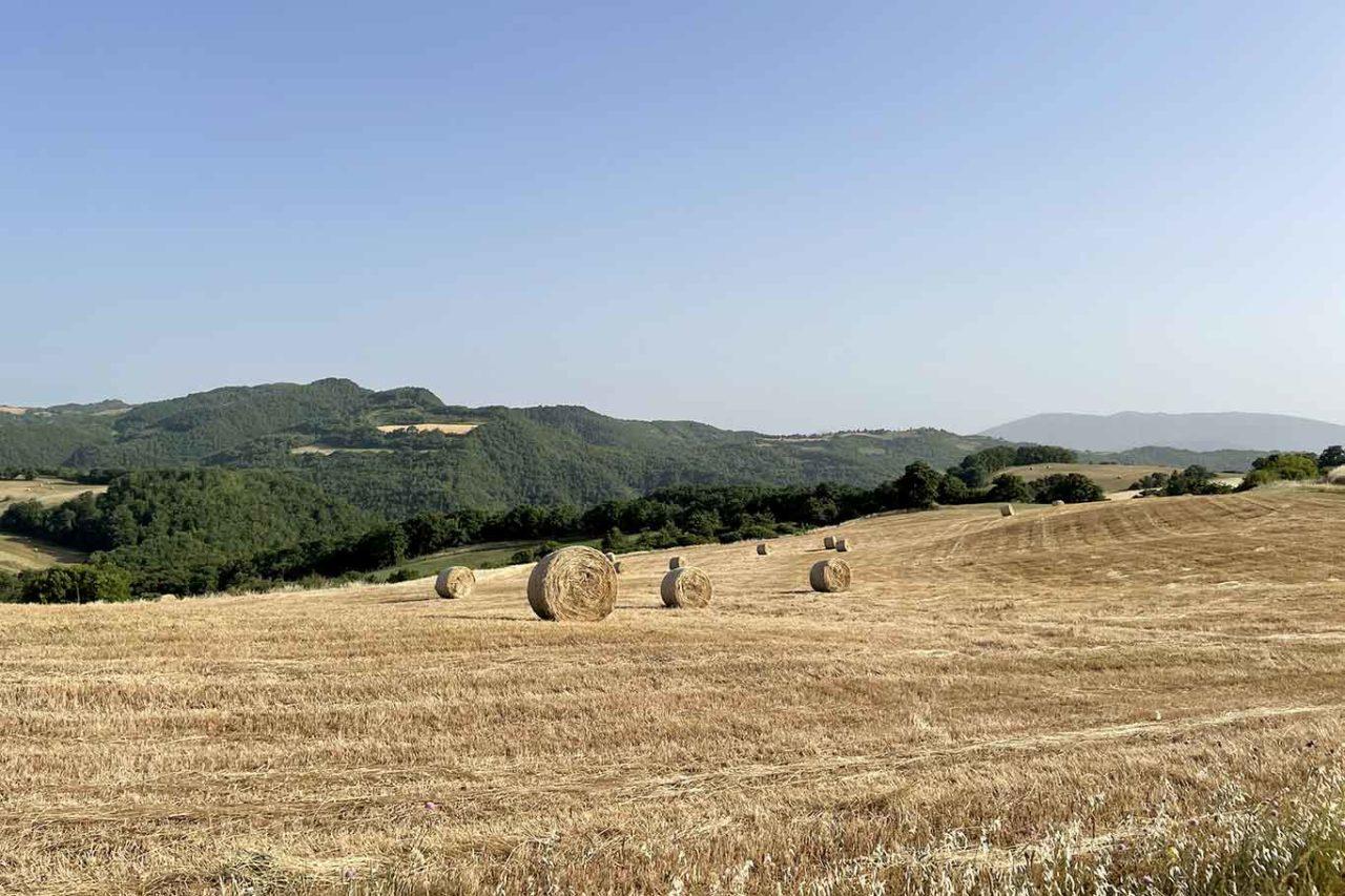 camp di grano