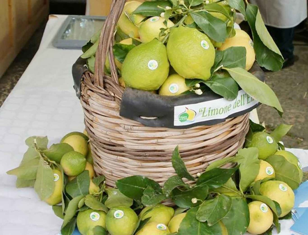 limoni dell'Etna