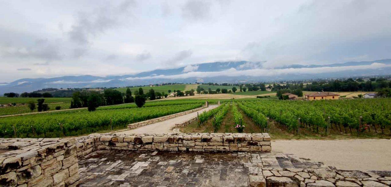 Azienda Giampaolo Tabarrini, vigne