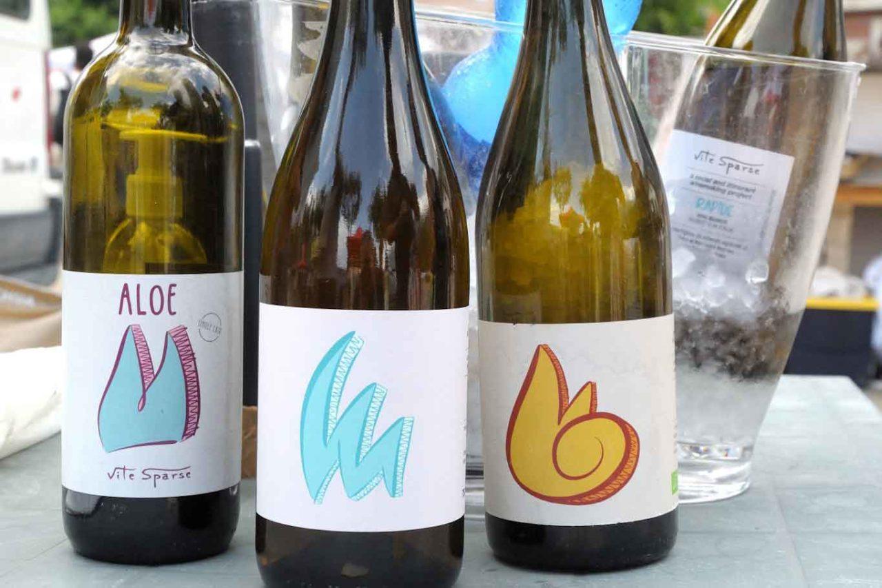 migliori vini naturali del Piemonte:  vite sparse