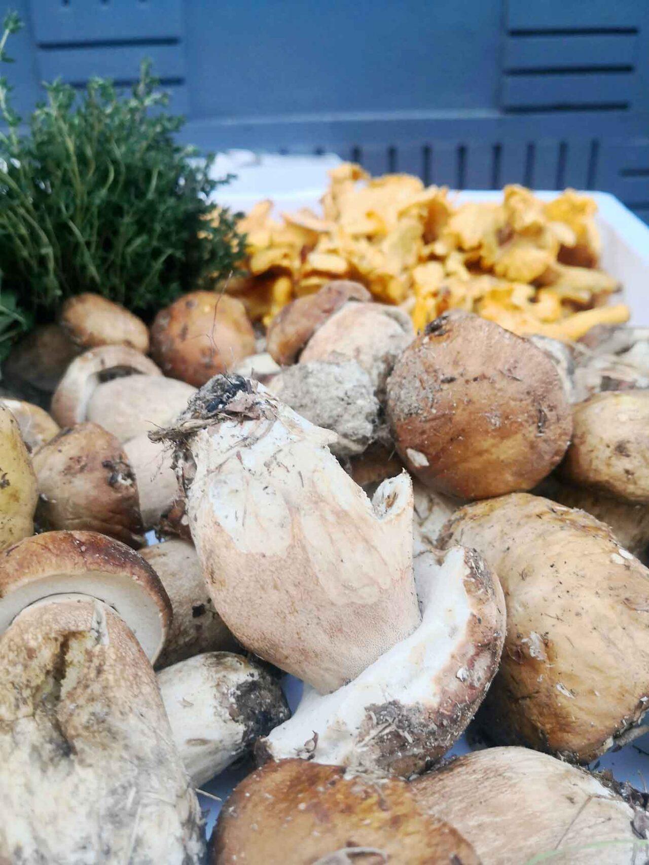 funghi porcini in Abruzzo: